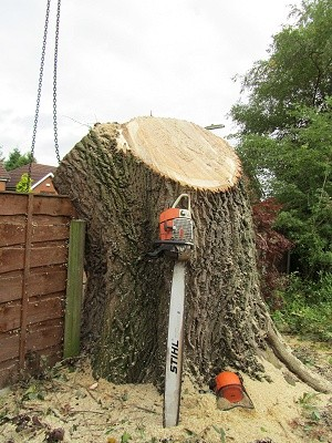 Sectional Felling Tree Surgery in Gatley, Stockport, Greater Manchester