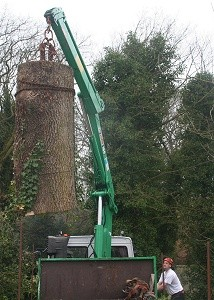 Stockport Tree Surgery By Local Arborists